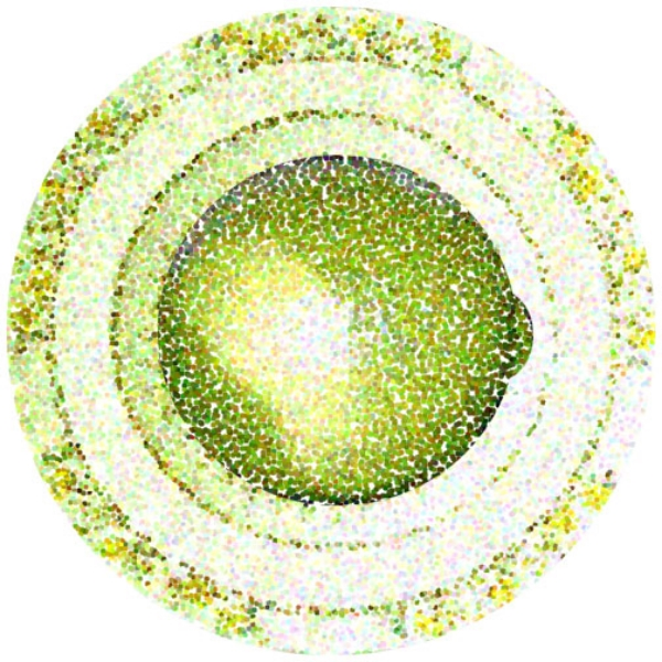 Lime with Circles, 2001  Digital Painting