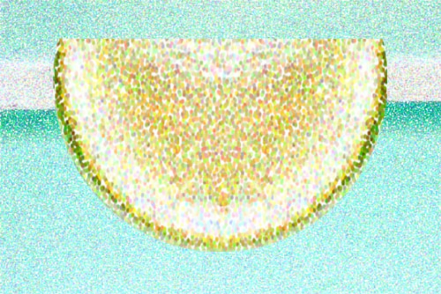 Lemon 1/2 Circle  Digital Painting