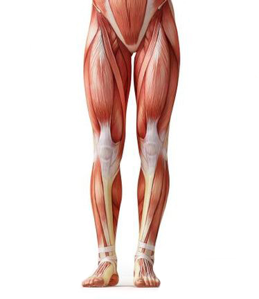 Level 1 - 3 Day lower Body Advanced Muscle Reconstruction Class ...