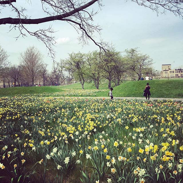 #spring #chicago #verylastthing