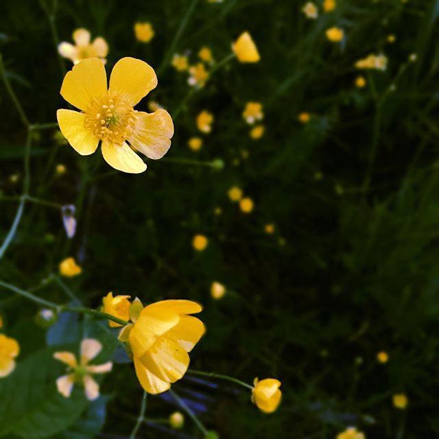 #summer #humboldtpark native flowers