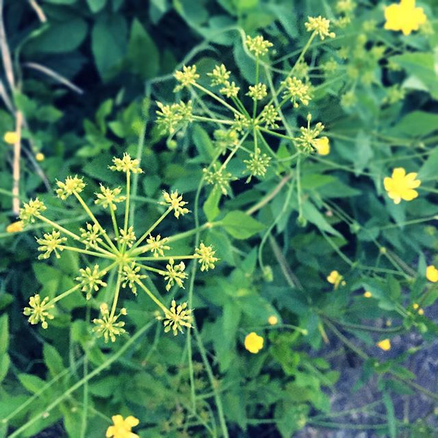 #summer prairie grasses and native plants in #humboldtpark
