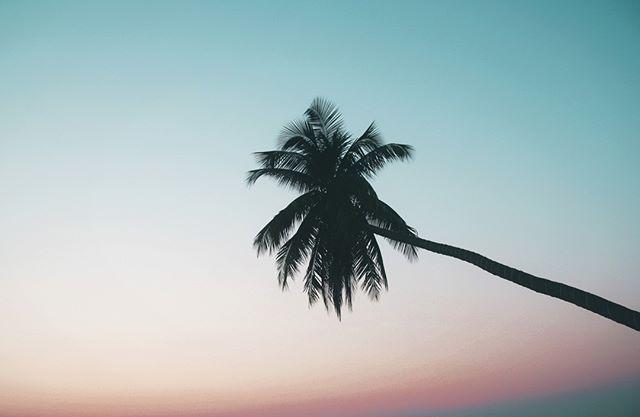 A L I I G N ᴬᴰᵛᴱᴺᵀᵁᴿᴱˢ 🌎⠀⠀⠀⠀⠀⠀⠀⠀⠀⠀⠀⠀⠀⠀⠀⠀⠀⠀ ⠀⠀⠀⠀⠀⠀⠀⠀⠀ Spring Vibrations...⠀⠀⠀⠀⠀⠀⠀⠀⠀ ⠀⠀⠀⠀⠀⠀⠀⠀⠀⠀⠀⠀⠀⠀⠀⠀⠀⠀ .⠀⠀⠀⠀⠀⠀⠀⠀⠀⠀⠀⠀⠀⠀⠀⠀⠀⠀ .⠀⠀⠀⠀⠀⠀⠀⠀⠀⠀⠀⠀⠀⠀⠀⠀⠀⠀ .⠀⠀⠀⠀⠀⠀⠀⠀⠀⠀⠀⠀⠀⠀⠀⠀⠀⠀ .⠀⠀⠀⠀⠀⠀⠀⠀⠀⠀⠀⠀⠀⠀⠀⠀⠀⠀ #explorebali #forahappymoment #visualmobs #exploringtheglobe #ci_bali #thebalibible #mytinyatlas #thecreative #instapassport  #travelog #focalmarked #theglobewanderer #artofvisuals #ig_masterpiece #exploreindonesia  #travelon #igersbali #awesome_earthpix #flashesofdelight  #aroundtheworldpix #coconuttree