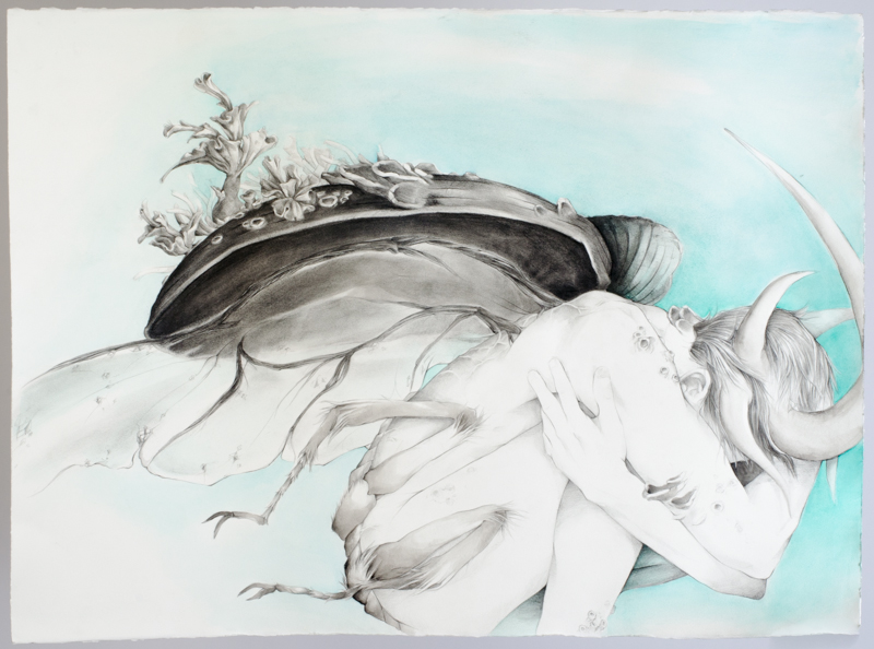 Beetle, 30x22, Graphite and Watercolor, 2014