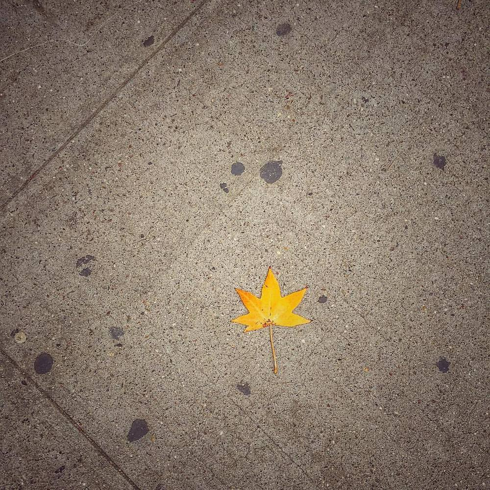 #Fall is #here #leaf #weather #nyclife #nature #liph nycweather #moments #seasons #change