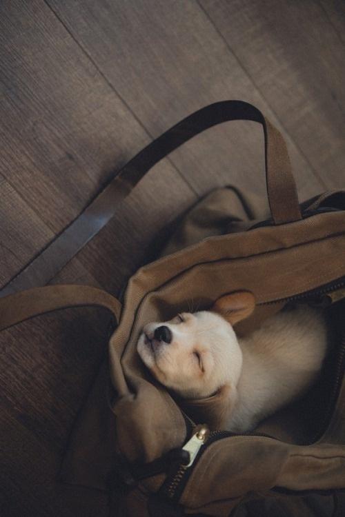 ultracutepets: The cutest dog.