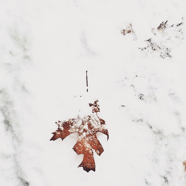 #leaves suffocating under the #snow #winter #white