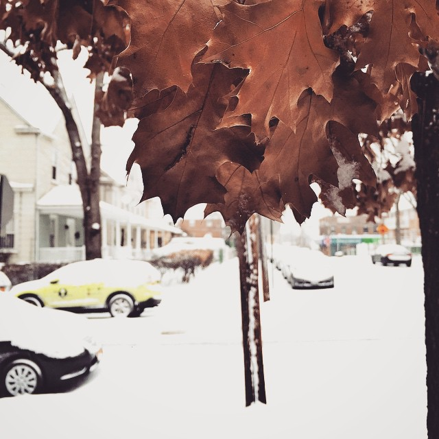 Wasn't expecting this! #snow #weather #leaves #white #nyc