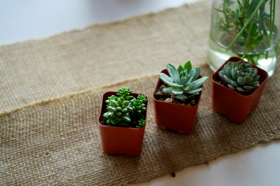 succulentfavors