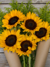 SUNFLOWERS      WHAT THEY MEAN:  Admiration    GIVE THEM TO:  People who wear shorts in winter.
