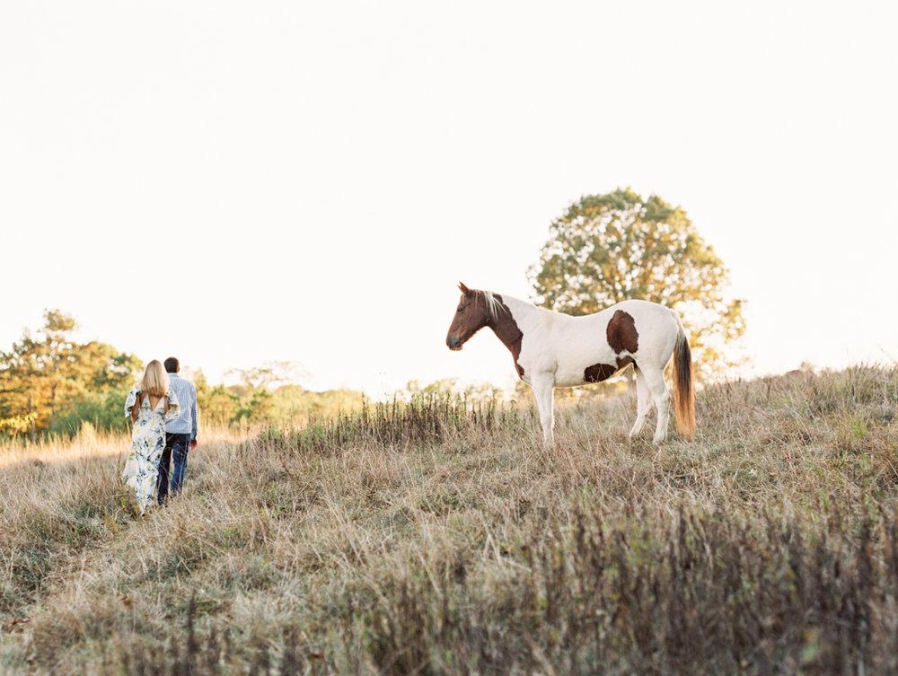 field horses fall north georgia wedding photographer