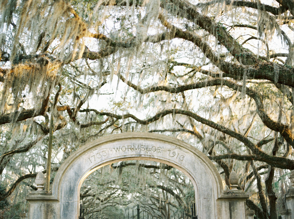 Wormsloe Plantation engagement photos