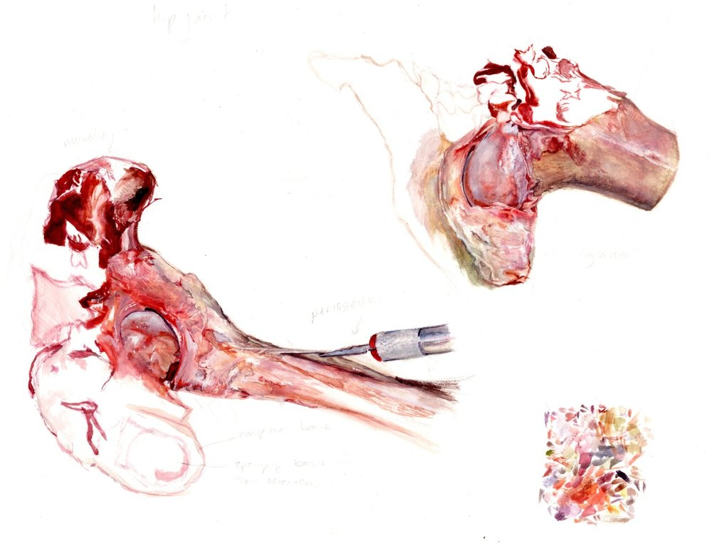 Lamb Hip Bone Study Gouache on bristol 2014