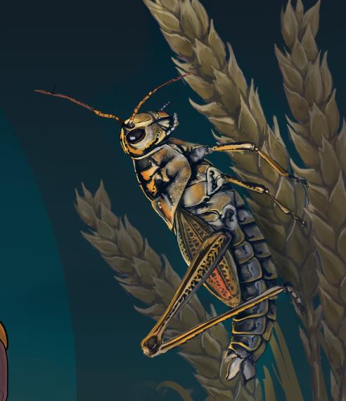 Romalea microptera, detail