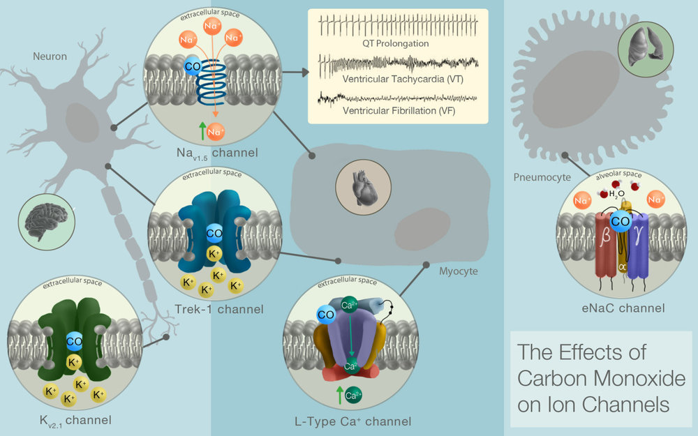 The Effects of Carbon Monoxide on Ion Channels