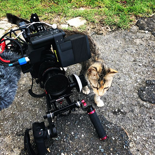 Making some good cat friends while here in #puertorico . . . . . #filmmaking #videoproduction #videography #video #travel #documentary #catsofinstagram #teamcanon #canonc300 @canonusa