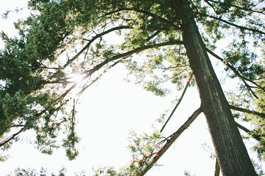 Union-Pine-Wedding-20.jpg