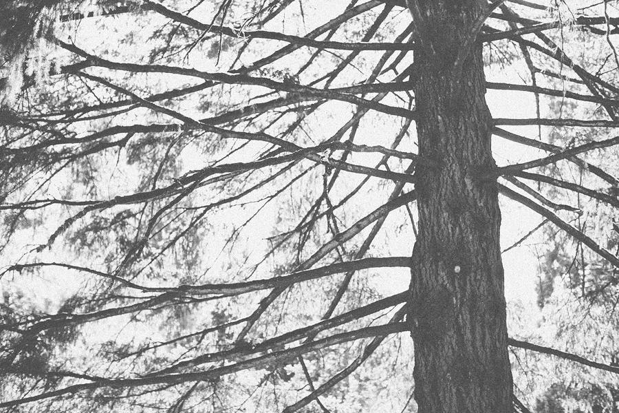 Union-Pine-Wedding-57.jpg