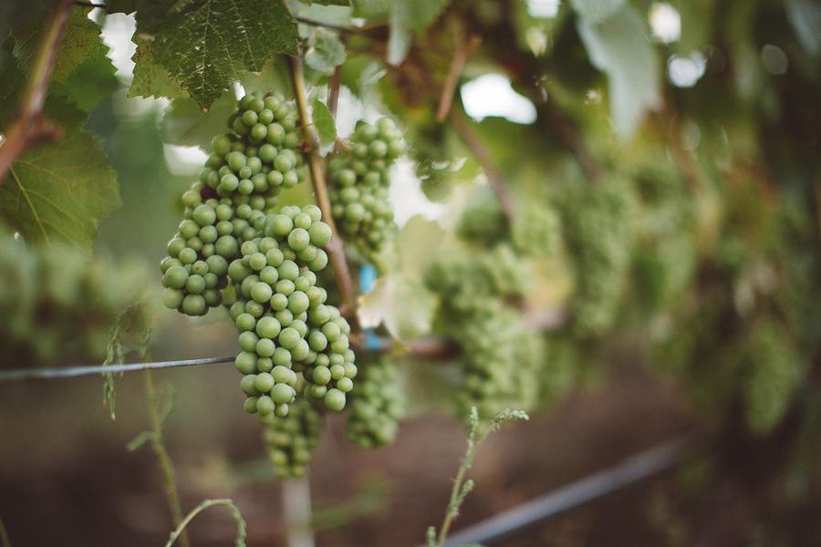 Maysara-Winery-Wedding-Photographs-3.jpg