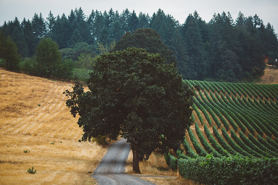 Vista-Hills-Vineyard-Wedding-Photos-3.jpg