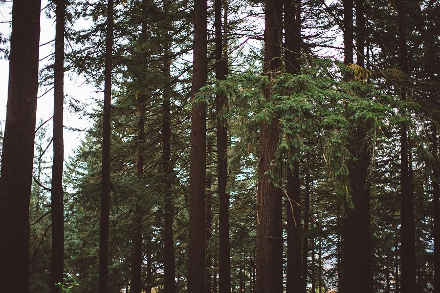 Mt-Tabor-Family-Photos-5.jpg