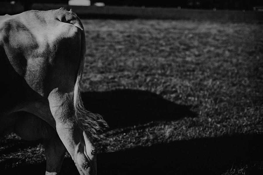 Raw-Dairy-Photographs-007.JPG