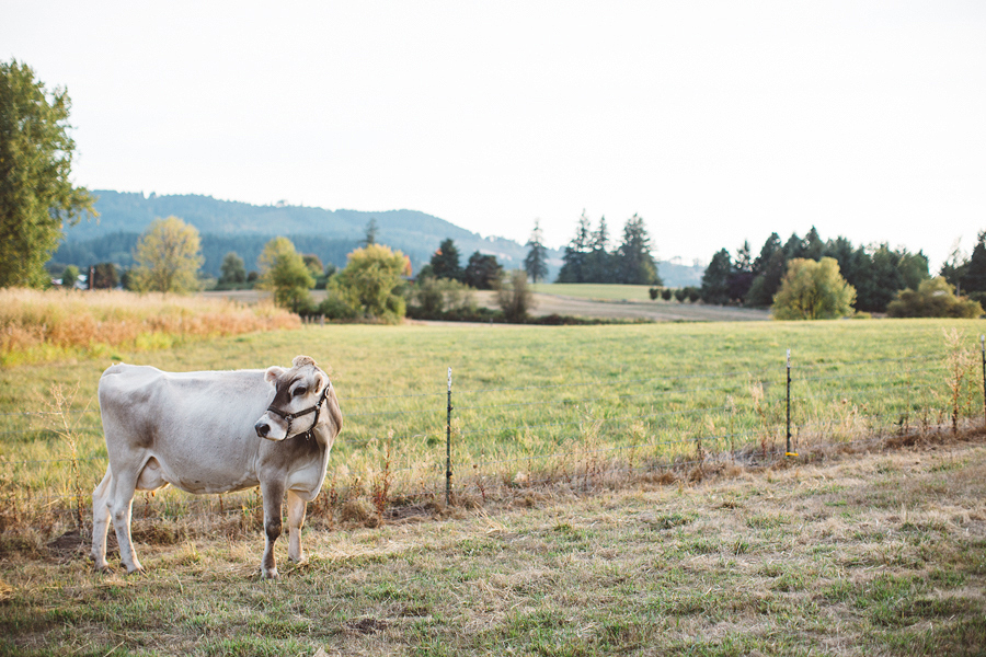 Raw-Dairy-Photographs-053.JPG