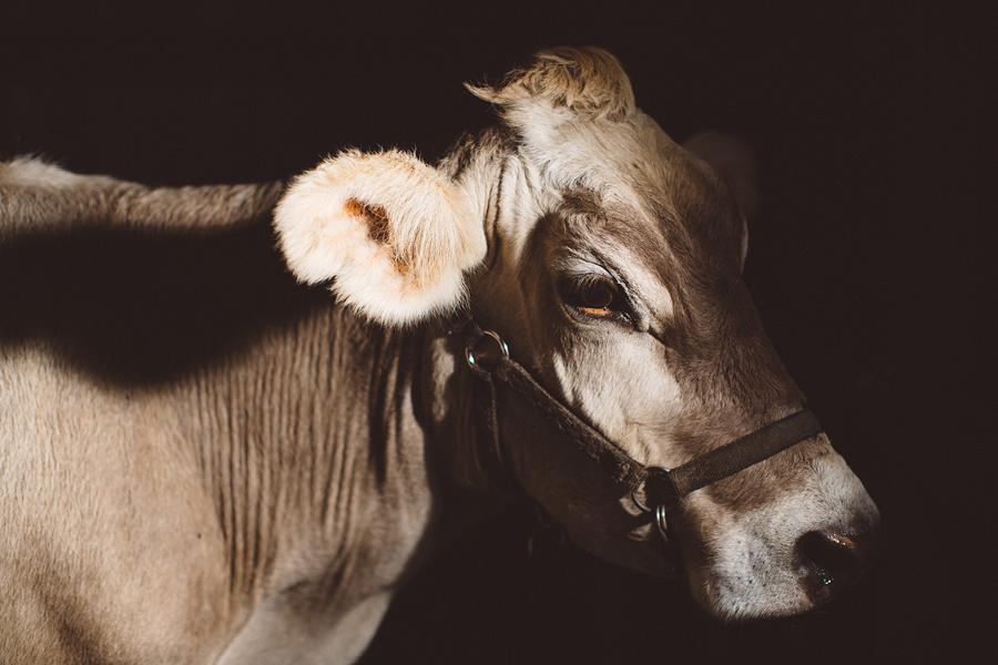 Raw-Dairy-Photographs-074.JPG