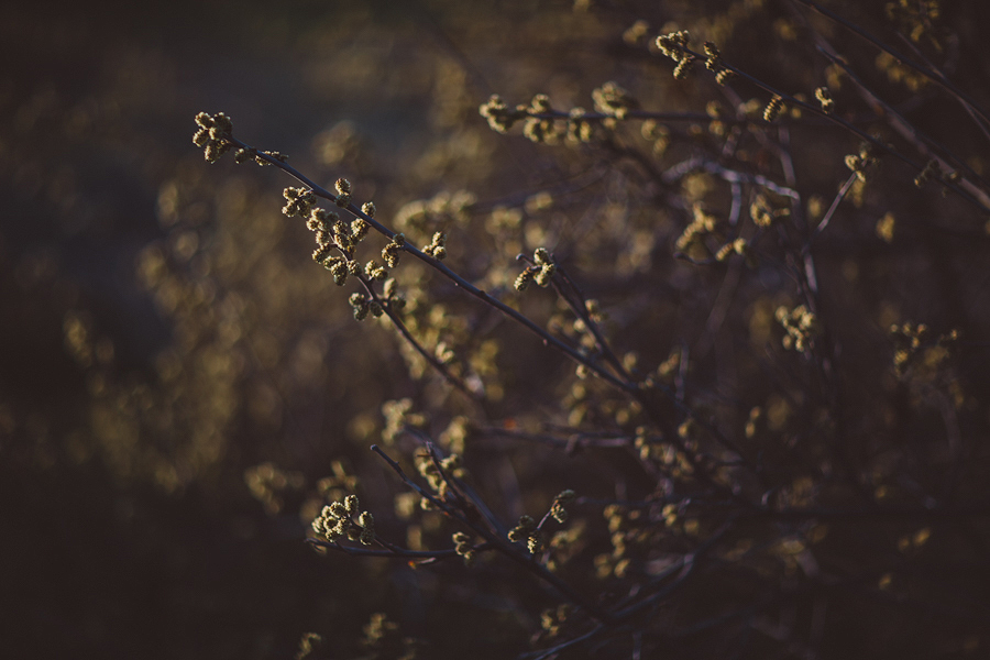 Boise-Foothills-Engagement-Photographer-20.jpg