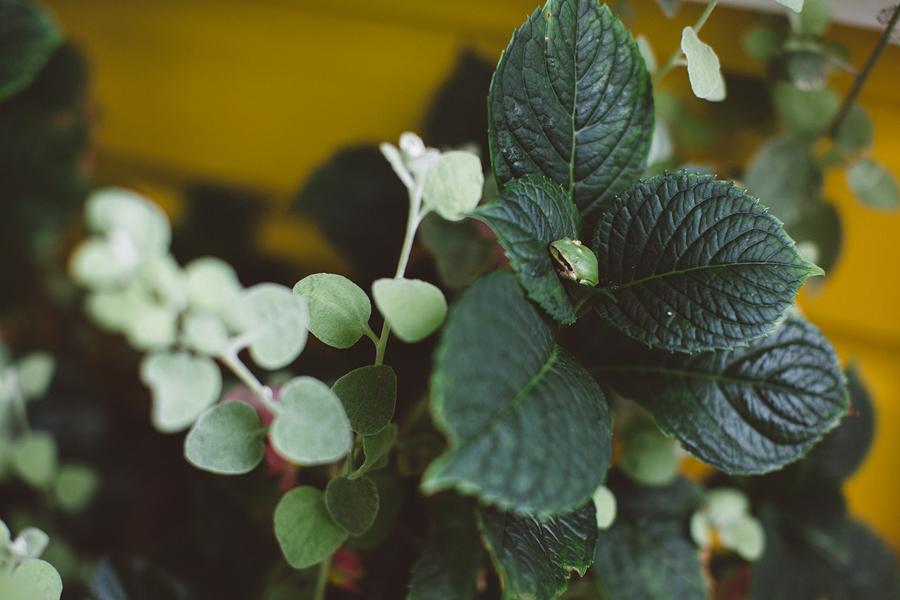Mt-Hood-Organic-Farms-Wedding-22.jpg