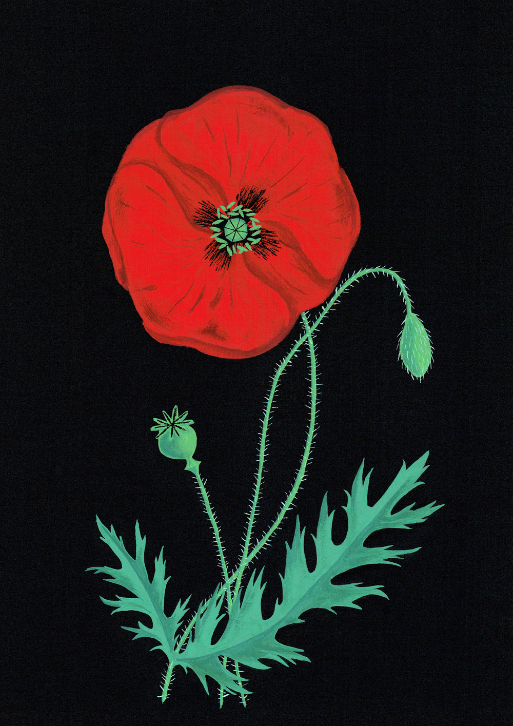 Poppy design for the Auckland War Memorial Museum.