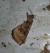 bat feeding remains