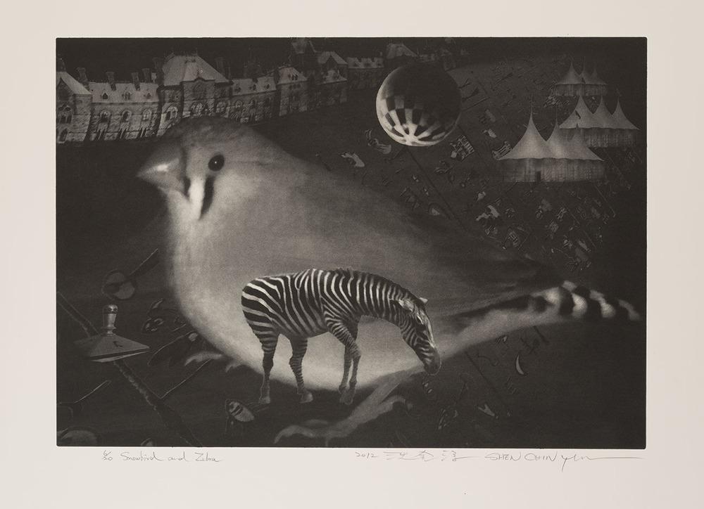 雪鳥與班馬 | AVE INVERNAL E ZEBRA | SNOWBIRD AND ZEBRA