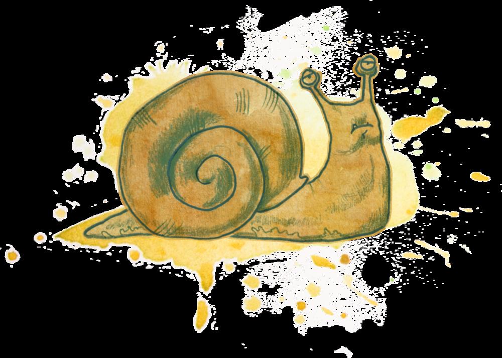 snail too