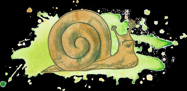 Left side snail cartoon.png