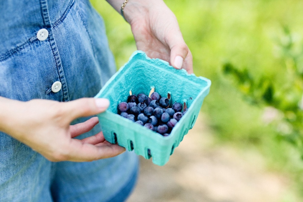 Carly A. Heitlinger Fishkill Farms Hudson Valley New York NYC Hush Hush Tips Pick Your Own Blueberries.jpg
