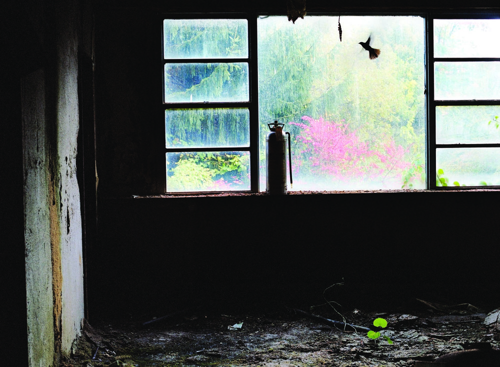 The Borscht Belt Marisa Scheinfeld Book.jpg