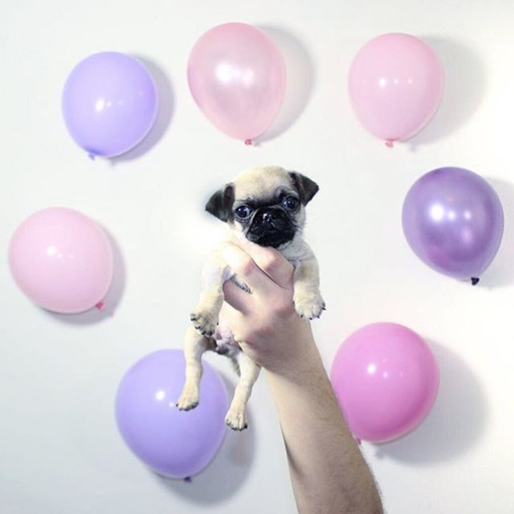 Charities-Pug Squad-Rescue-Puppy Baloons.jpg