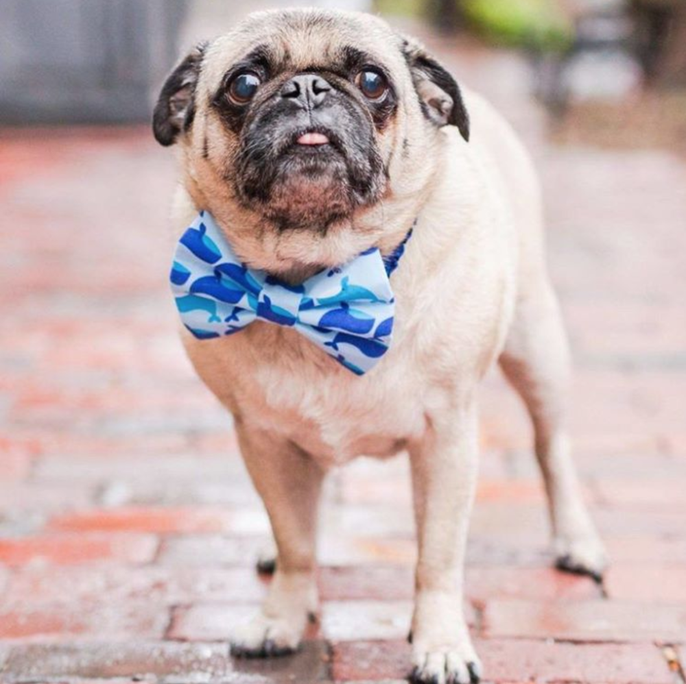 Charities-Pug Squad-Rescue-Puppy Tie.jpg