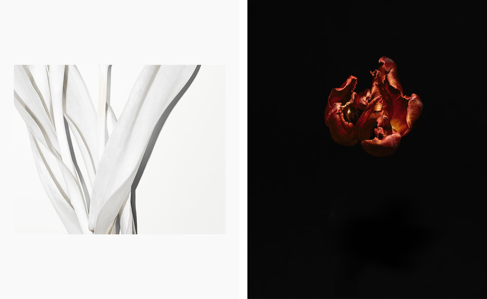 Tulips_PH19_P002.jpg