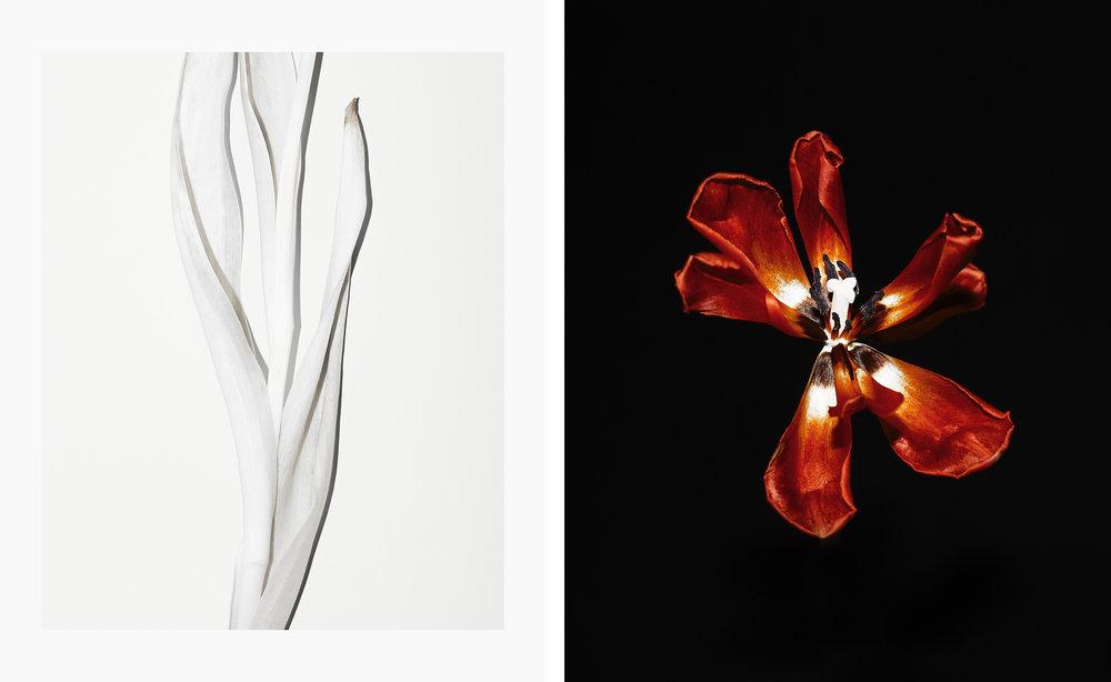 Tulips_PH19_P001.jpg