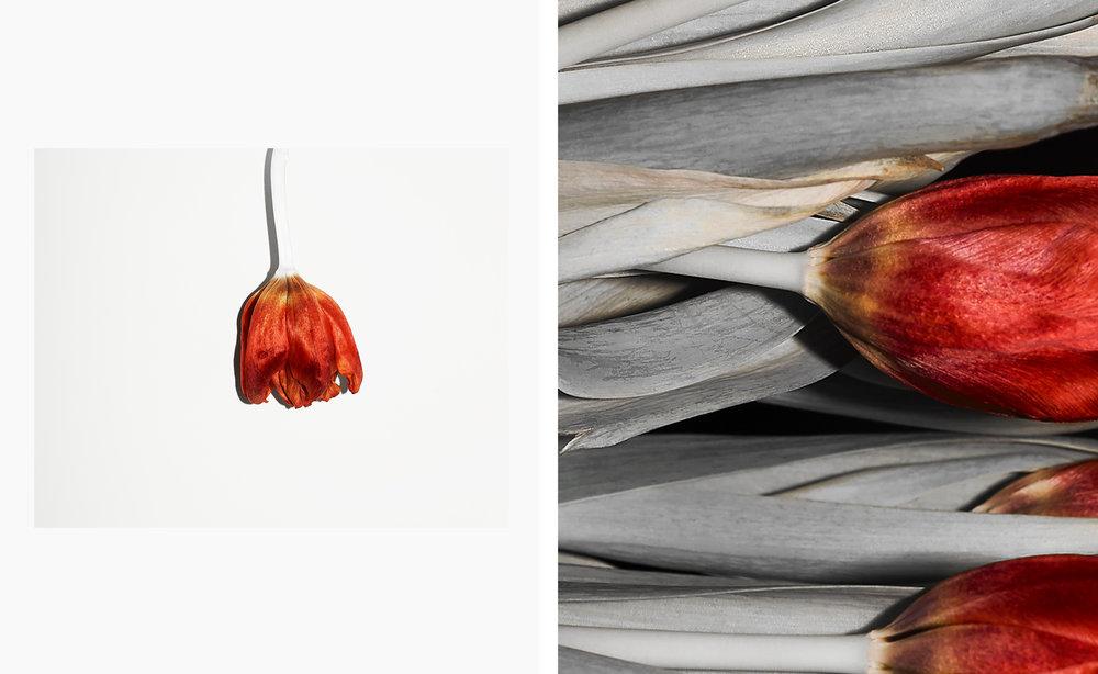 Tulips_PH19_P003.jpg