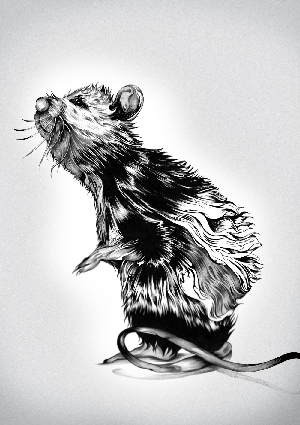 The Rat.jpg
