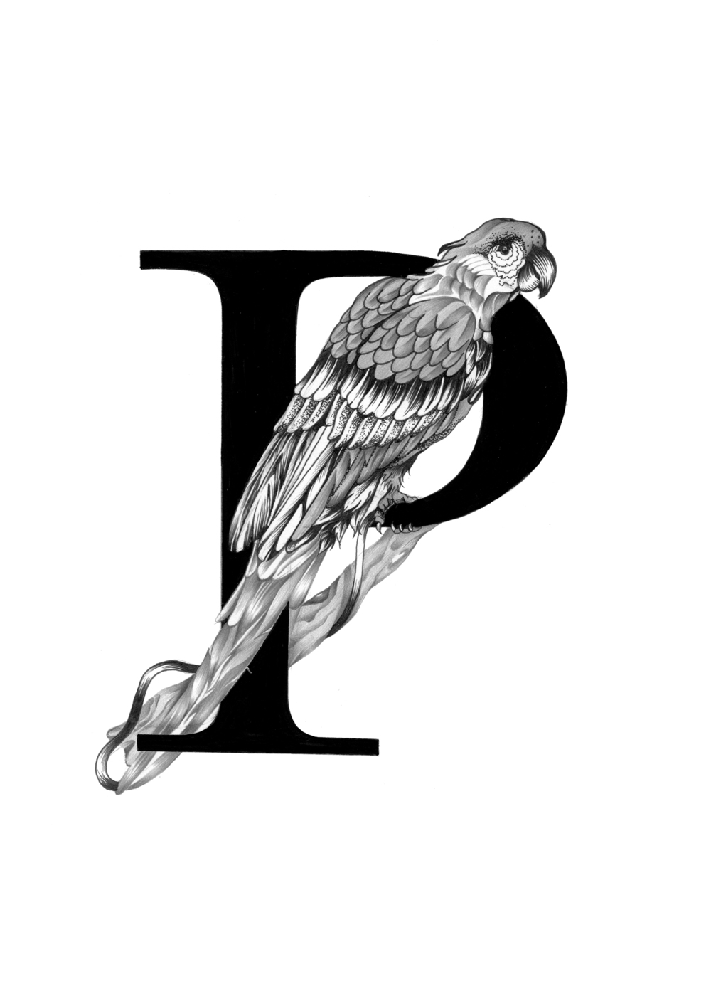 300 dpi-P Parrot.jpg