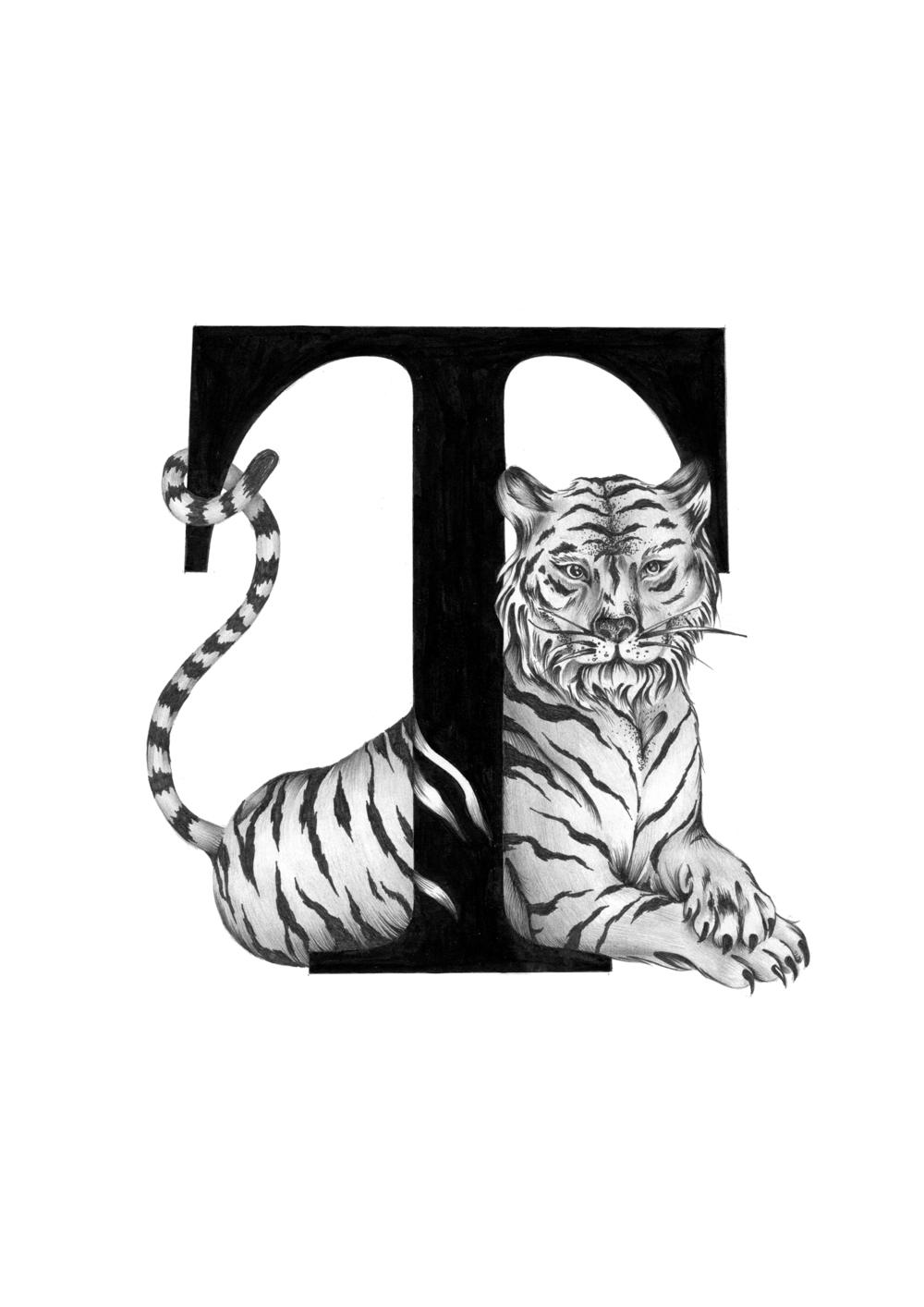 300 dpi-T Tiger body.jpg