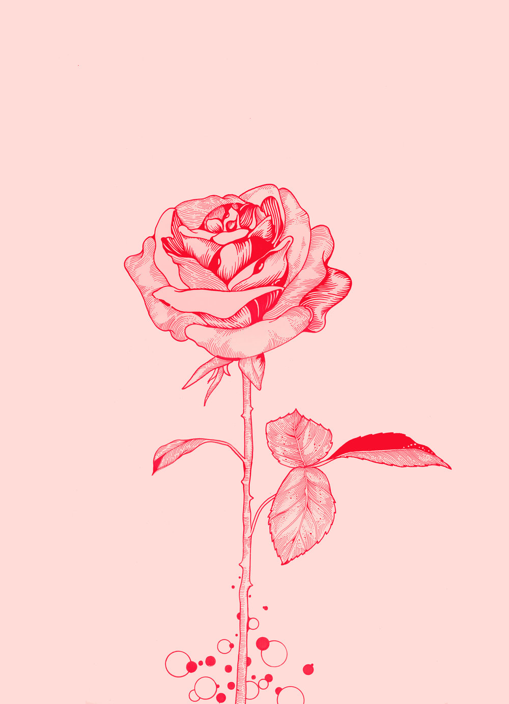 Rose Hybrid Med Res.jpg