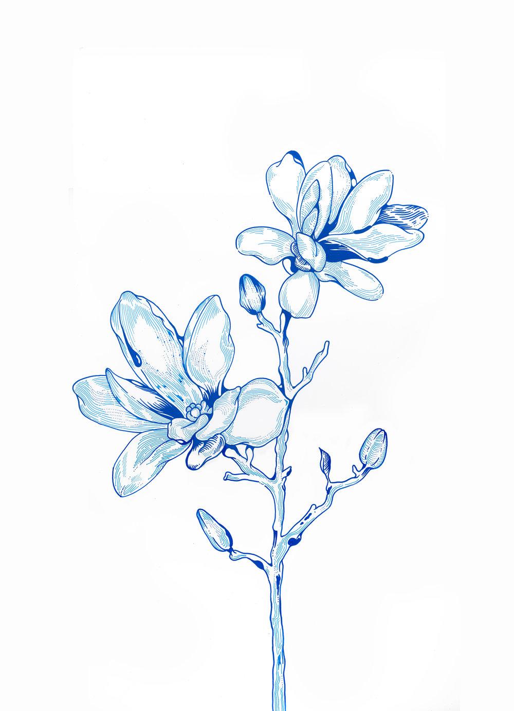 Magnolia Hybrid Med Res.jpg