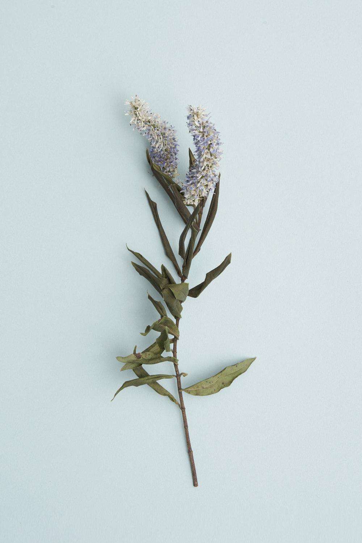 Violet & Wren Vita Collection Still Life Botanicals