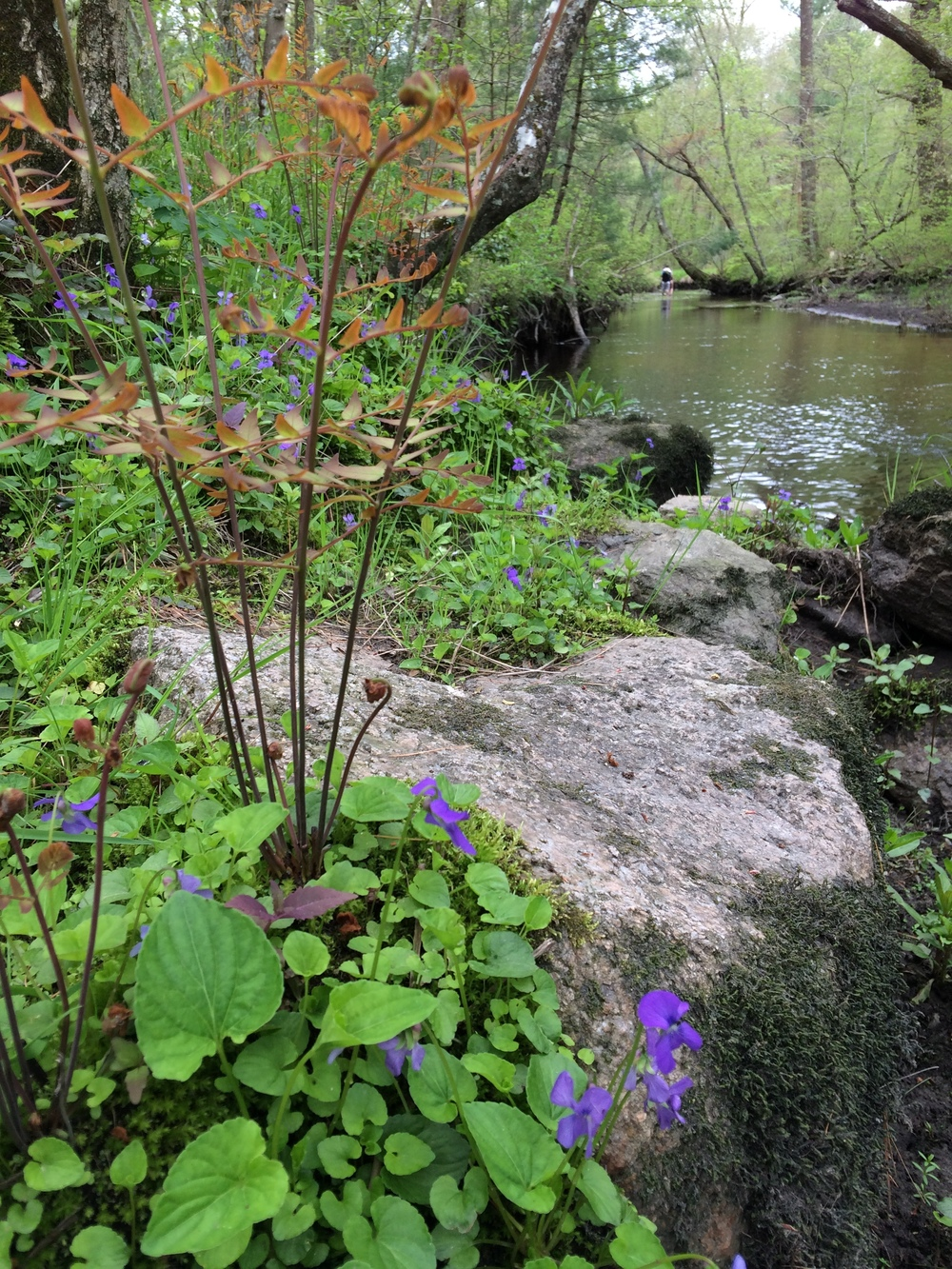 violets by river
