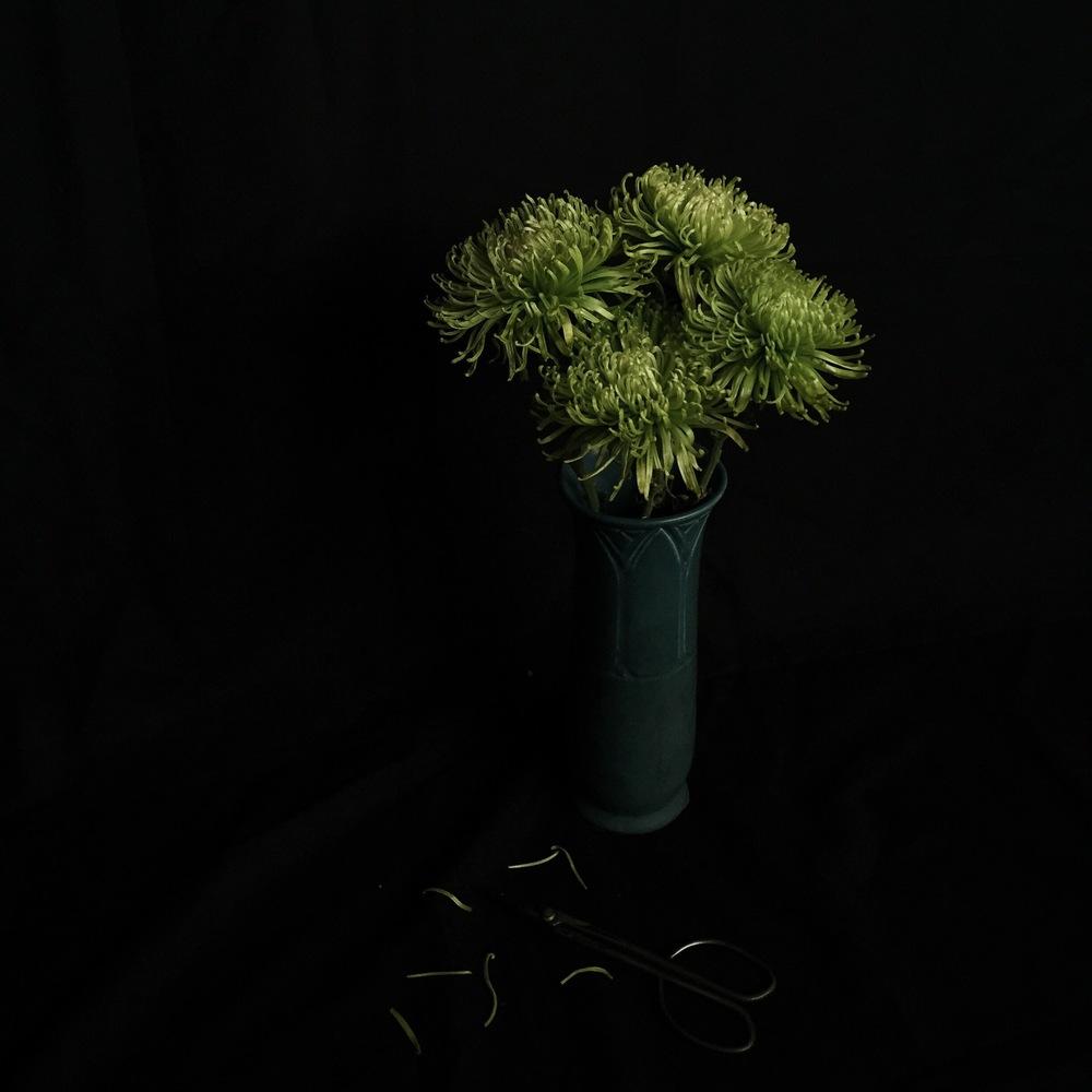 vscocam-green.jpg